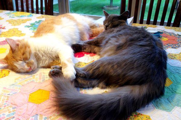 FD kitties